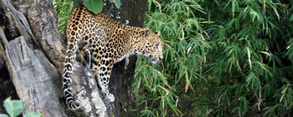 Bandhavgarh-Tiger-Reserve-1