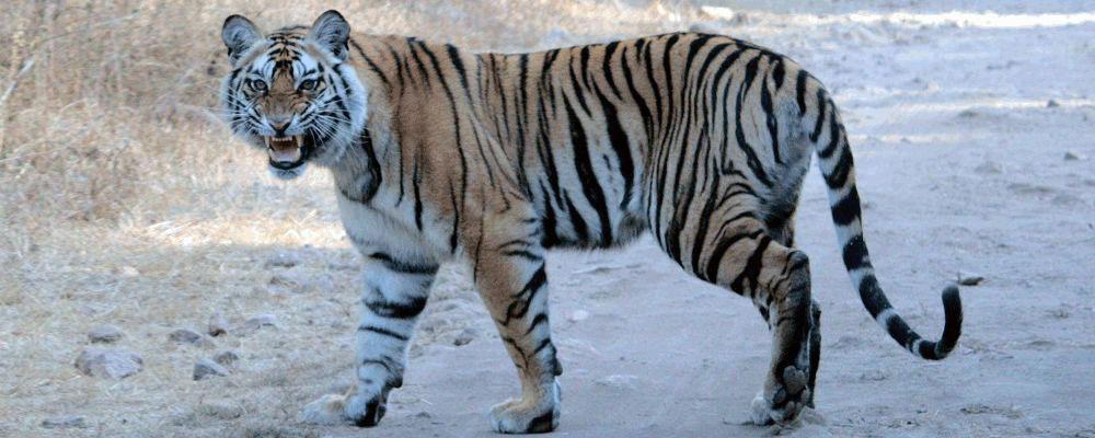 Bandhavgarh-Tiger-Reserve-2