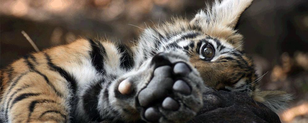 Bandhavgarh-Tiger-Reserve-3