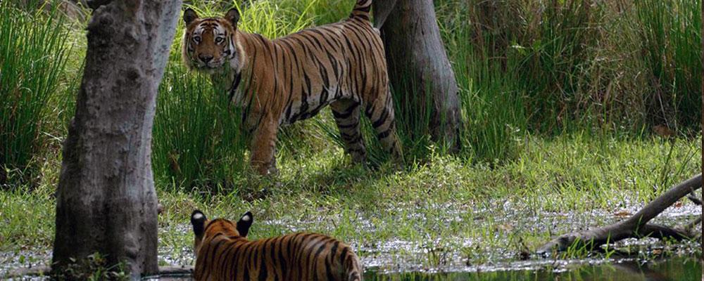 Bandhavgarh-Tiger-Reserve-4