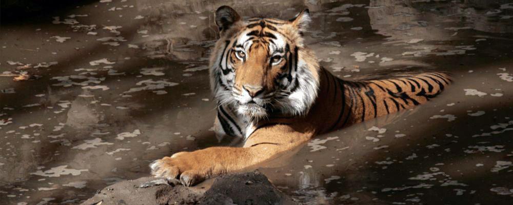 Bandhavgarh-Tiger-Reserve