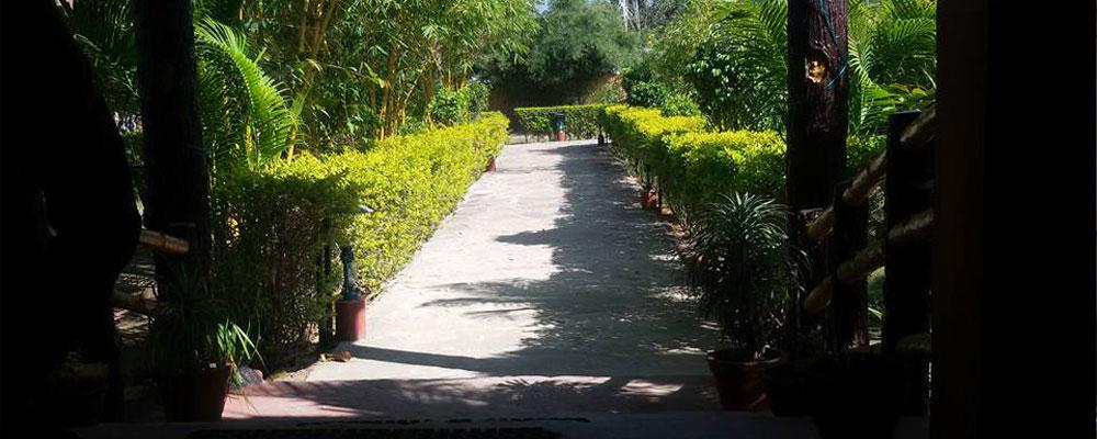 Tiger-Inn-Resort-Bandhavgarh-v
